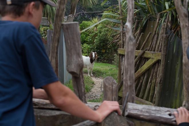Zoo 2.3 (30)